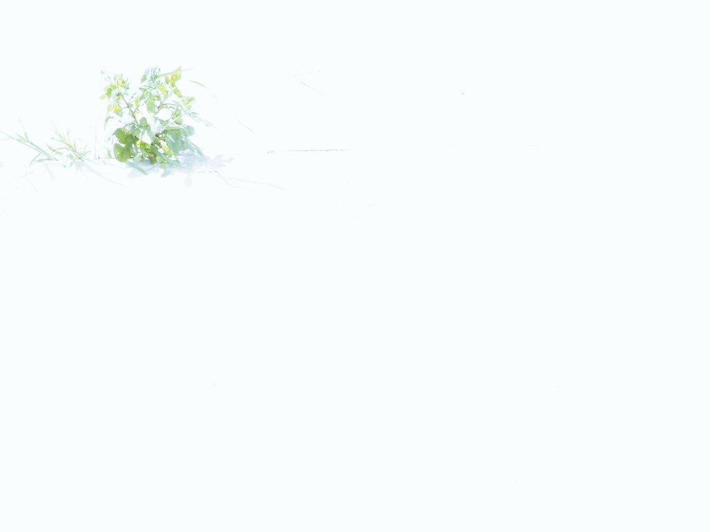 白飛びと緑の写真