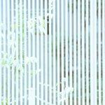 草木の写真