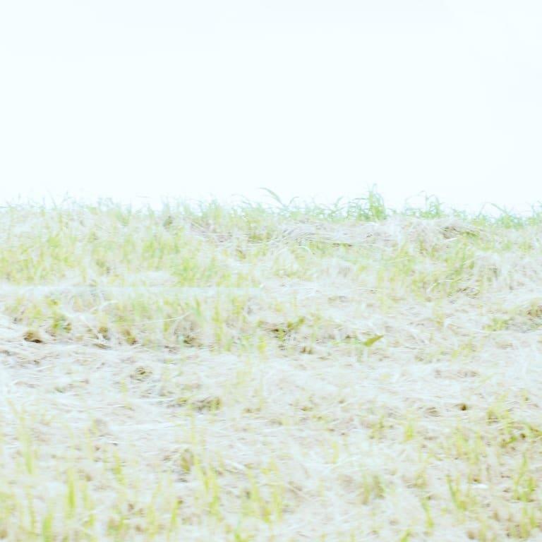 ソノサキ真っ白の写真